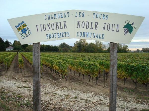 Noble-Joué-vignoble-de-Chambray-les-Tours