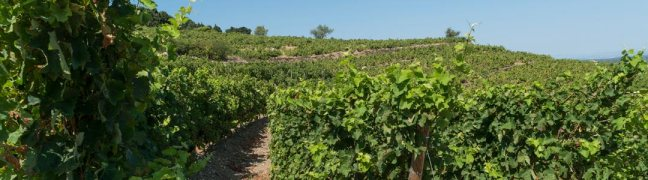 Tour vieille viñas.jpg